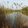 168 Trennfelder Baggersee