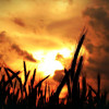 238 Sonnenaufgang über dem Ammerfeld